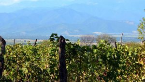 Виноградники, Грузинское вино, Грузия