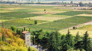 Винодельческие усадьбы, Грузинское вино, Грузия