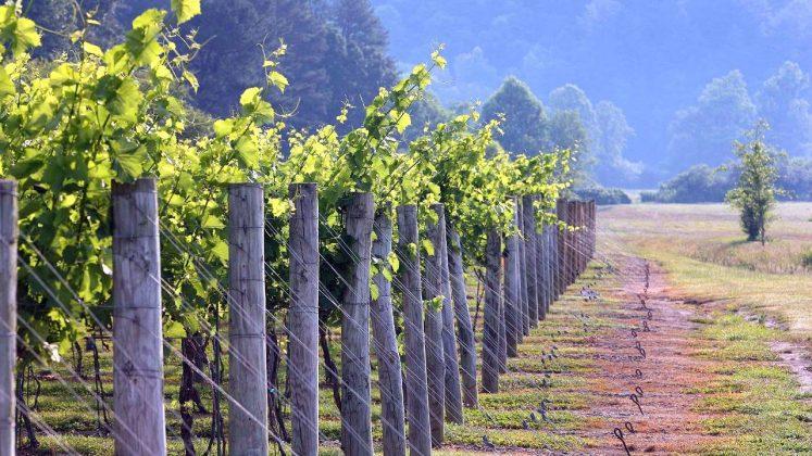 Выращивание винограда, Грузинское вино, Грузия
