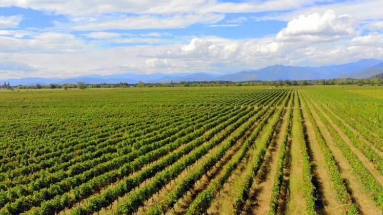 Ряды виноградников, Грузинское вино, Грузия