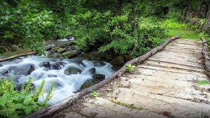 Природа парка Кинтриши, Кобулети, Грузия