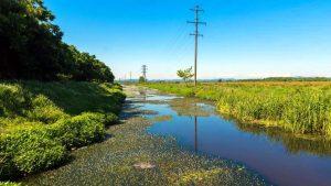 Сфагновые болота в заповеднике Испана, Кобулети, Грузия