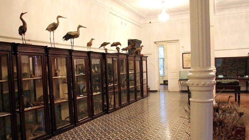 Чучела животных и образцы растений, Краеведческий музей Аджарии, Батуми, Грузия