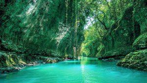 Реки и нависшие арки из растений , Национальный парк Мтирала, Батуми, Грузия