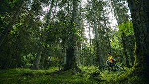 Красоты лесов парка Мтирала, Национальный парк Мтирала, Батуми, Грузия