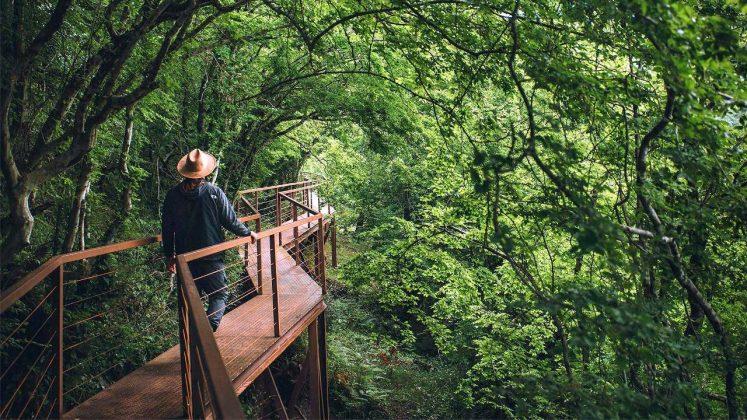 Дорожки для пеших прогулок в парке Мтирала, Национальный парк Мтирала, Батуми, Грузия