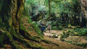 Лесные заросли парка, Национальный парк Мтирала, Батуми, Грузия