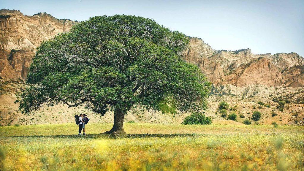 Равнины на территории парка, Национальный парк Мтирала, Батуми, Грузия